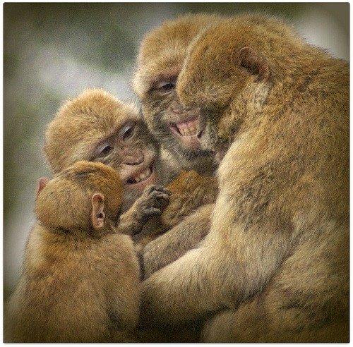 Деньги у обезьян – это источник жадности, жестокости и ярости