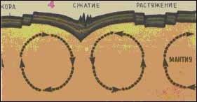 Рис. 4. Конвекционные потоки в мантии по гипотезе В.В.Белоусова. Сходящиеся под корой потоки вызывают сжатие коры, расходящиеся - растяжение.