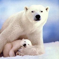 Антарктида какие животные там живут