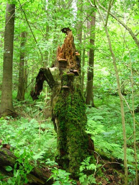 К сожалению, подобное не редкость в наших лесах и парках