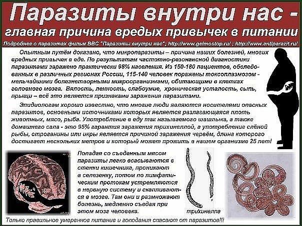 Причина появления паразитов в наших телах