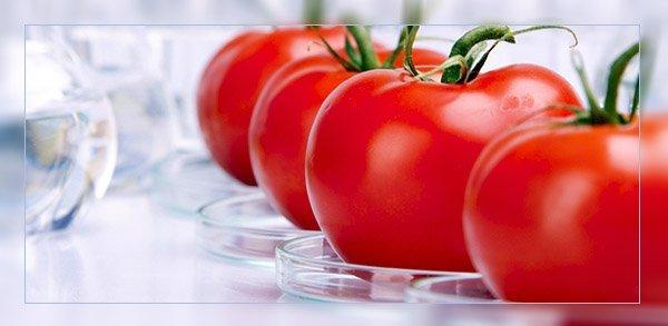 Опасность ГМО для человека и природы