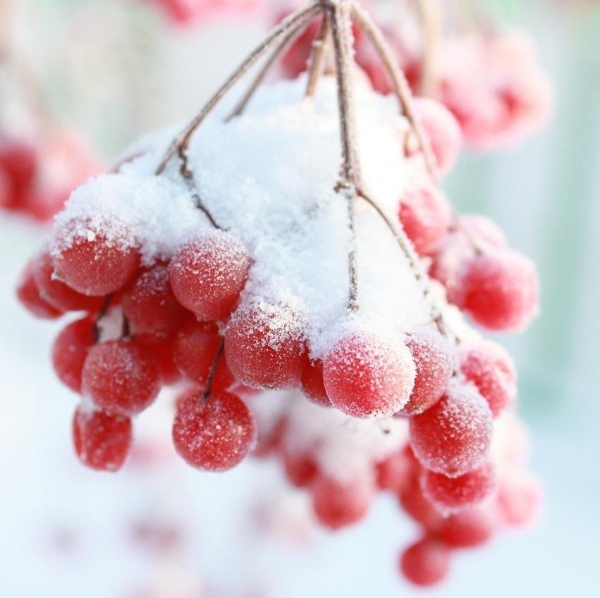 Зимушка зима обои на рабочий стол