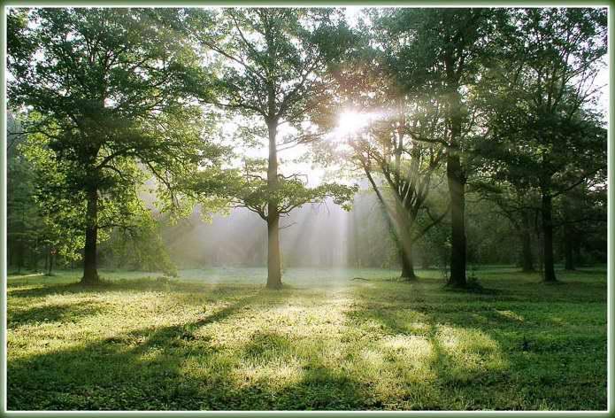 Начало счастливого дня, или Зачем просыпаться рано утром (4)
