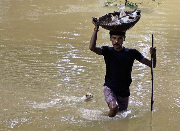 Житель деревни спасает котят в корзине во время наводнения на окраине города Каттак.