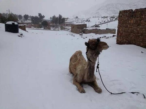 """Картинки по запросу """"снег египет"""""""