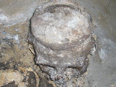 Археологи Приднестровья изучают крупный скифский могильник (ФОТО)