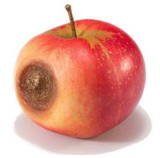 гнилое-яблоко2