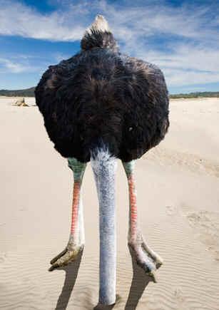 1391732750_ostrich-head-in-sand