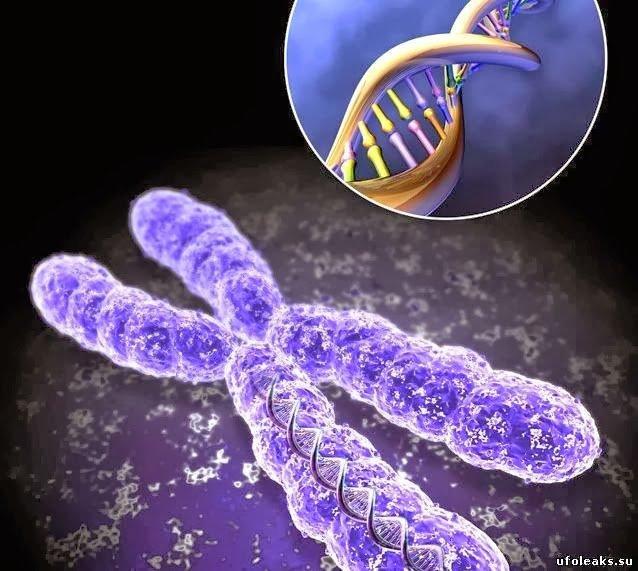 Технология омоложения - О ДНК, фото и биологических часах