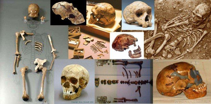 Некоторые находки неандертальцев, сделанные к 1974 году