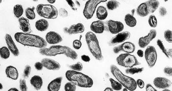 Бактерии Coxiella burnetti, возбудитель Ку-лихорадки. В организм человека они попадают через дыхательные пути и кожу. При заболевании человек испытывает головную боль, боль в пояснице, мышцах, суставах. Нарушается сон, пропадает аппетит.