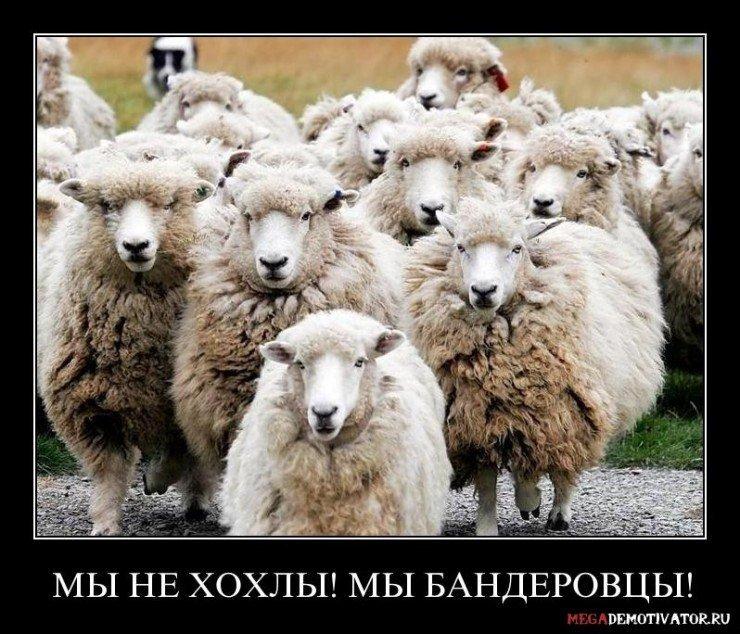 my-ne-xoxly-my-banderovcy_1