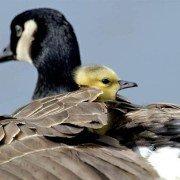 Нет сильней материнской любви