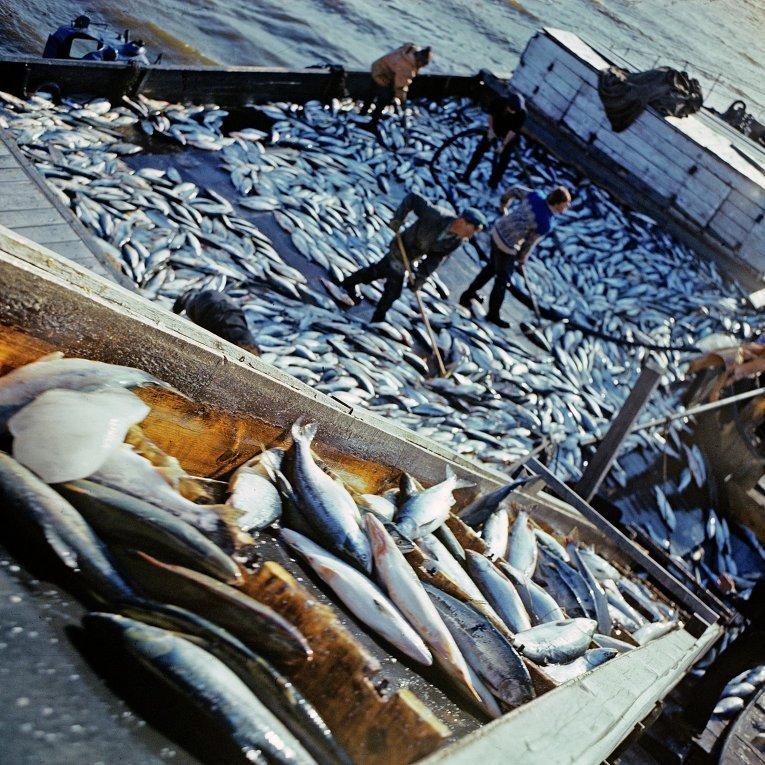 важно, ведет тральщик разнорабочий на вылов рыбы заправим ваш картридж