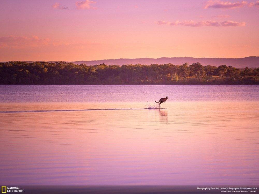 Бегущий по воде