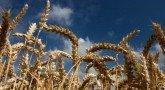 В России собрали урожай зерна, достаточный для ее продовольственной безопасности