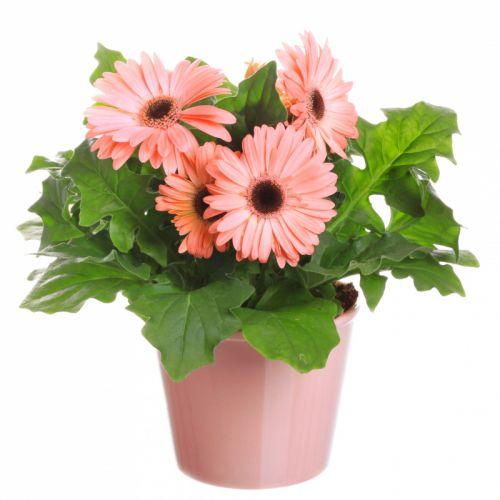 10 растений_8_enl