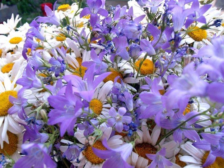 букет полевых цветов  картинки