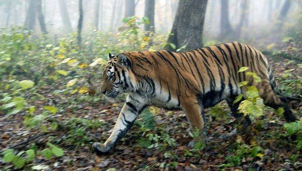 © Фото: WWF Russia / Vladimir Filonov