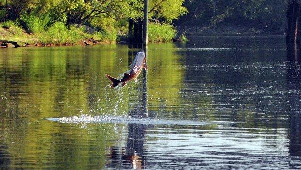 © Flickr/ Florida Fish and Wildlife