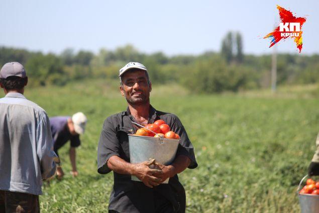 Фермер оплачивает мигранту и медсправки, и патенты,и экзамены. Фото: Екатерина МАЛИНИНА