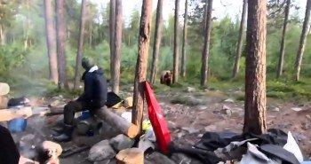 Туристы в Заполярье отогнали медведя «Песней про зайцев» Видео.