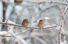 Если этот день был холодным и снежным, то и весну ждали такую же (Фото: nixoid, Shutterstock)
