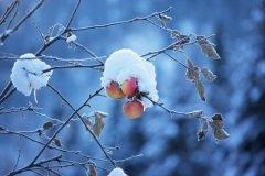 Лист, оставшийся на дереве до Кузьминок, предвещал мороз следующей зимой (Фото: Maxim Petrichuk, Shutterstock)