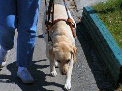 Собака-поводырь — глаза слепого человека (Фото: Aaron Bunker, Shutterstock)