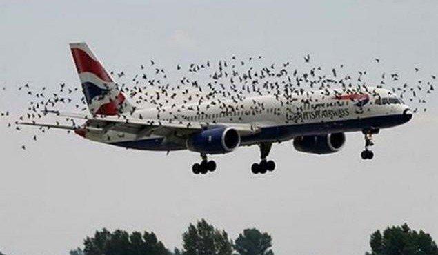 mnogo-ptits-na-aehrodrome