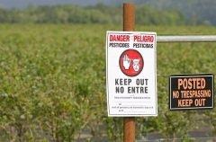 Промышленный выпуск пестицидов принес населению планеты больше вреда, чем пользы (Фото: TFoxFoto, Shutterstock)