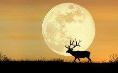 От Знамения наши предки всегда ждали чего-то особенного... (Фото: AZP Worldwide, Shutterstock)