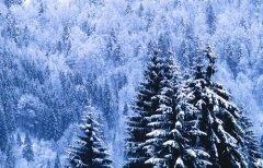 Тихо в это время было и в зимнем лесу... (Фото: Dirk Ott, Shutterstock)