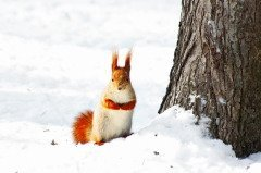 В Настасьин день наблюдали за погодой... (Фото: Aluha, Shutterstock)