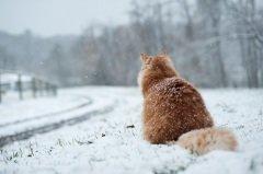 На Ерему советовали особо внимательно наблюдать за кошкой (Фото: Jon Beard, Shutterstock)