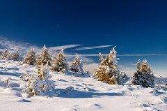 Также по Павлову дню смотрели, каким будет лето (Фото: leonid_tit, Shutterstock)