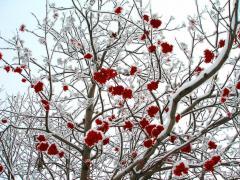 «Пришла Антонина - зиме половина», - говорили в народе (Фото: alexcoolok, Shutterstock)