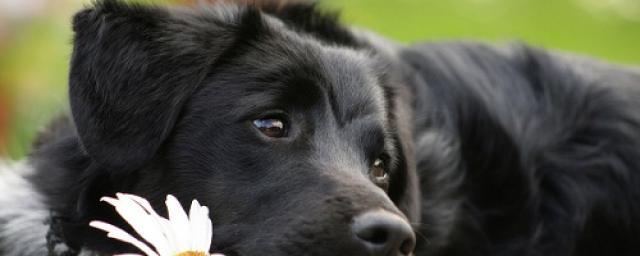 собаки читают эмоции