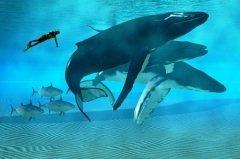 Сегодня во всем мире отмечается День китов (Фото: Catmando, Shutterstock)
