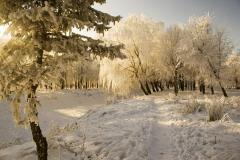 По этому дню наши предки судили о весне (Фото: Kristina Stasiuliene, Shutterstock)