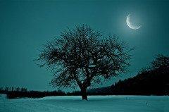 На Лаврентия наблюдали за луной... (Фото: Smit, Shutterstock)