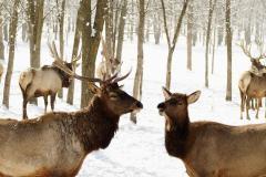 Считается, что на Трехсвятие в лесах начинается звериный свадебник (Фото: Devin Koob, Shutterstock)