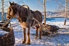 Агафья — покровительница домашнего скота (Фото: Chu-x, Shutterstock)