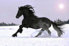 Мороз запел — санный след оледенел (Фото: Nastenok, Shutterstock)
