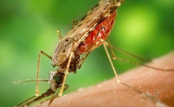 насекомых обработают