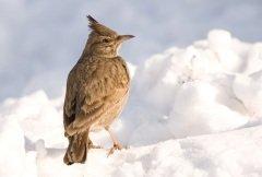 Обряд закликания Весны связывали с первым прилетом птиц и началом таяния снегов (Фото: Labrador Photo Video, Shutterstock)