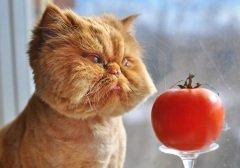 В мире существует много праздников, посвященных этим животным (Фото: Zanna Holstova, Shutterstock)