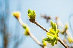 В этот весенний день принято воспевать матушку-природу (Фото: Romas_Photo, Shutterstock)
