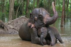 Очень нежная мама тайского слоненка (Фото: Sukpaiboonwat, Shutterstock)